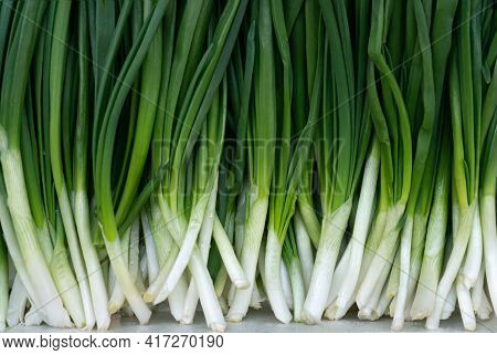 Green Background .leaf Of Green Onion, Spring Onion, Scallion, Sprouts Of Onion. Healthy Food Concep