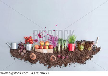 Organic Fruits And Vegetables Garden Growth Concept, Red High Antioxidant Foods