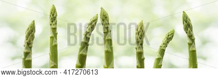 Fresh Green Asparagus Tips In A Row In Front Of Bright Abstract Bokeh Background. Horizontal Close-u