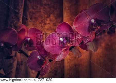 Purple Orchid Flowers Hdr Shallow Depth Of Field Close Up. Horizontal Photography In Vintage Tone. B