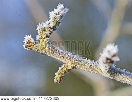 Abstract Closeup Detail Of Tree Twig Branch Covered In Ice Hoar Frost Icicles During Winter
