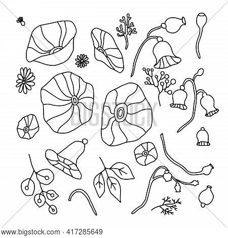 Botany Floral Set. Vintage Flowers. Black And White Drawn Illustration In The Style Of Engravings.
