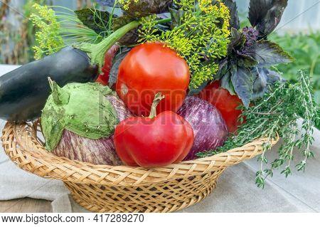 Basket Of Fresh Organic Vegetables, Local Food, Freshly Picked From The Garden. Harvest Fresh Vegeta