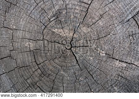 Close Up View Onto Stump Of Pine Tree, Its Surface With Heartwood, Growth Rings, Wood Texture. Crack