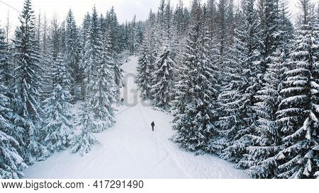 Idyllic Winter Scenery Of Evergreen Forest On The Mountain In Winter Snowy Day. Aerial. High Quality
