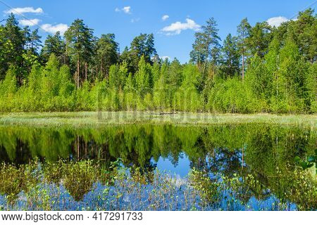 Lake In Virgin Forest, Untouched By Human, & Hidden Behind Wall Of Forest Trees