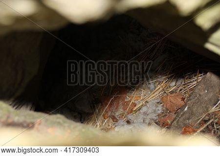 Animal Den With Fun In Rocky Outcrop