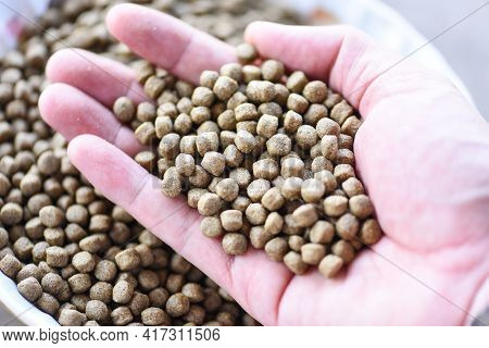 Feed The Fish, Close Up Brown Pellets Feeds For Fish On Hand