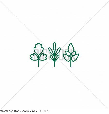 Parsley, Basil And Thyme. Set Of White Line Twigs, Shoots, Sprigs Isolated On White. Agriculture, Na