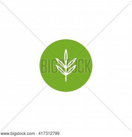 White Line Rosemary Twig, Shoot, Sprig In Green Circle Isolated On White. Eco Company, Agriculture,