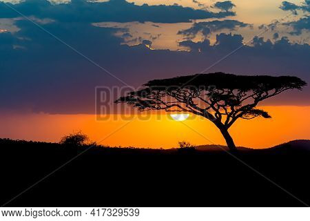 The Mesmerizing View Of The Silhouette Of A Tree In The Savanna Plains During Sunset