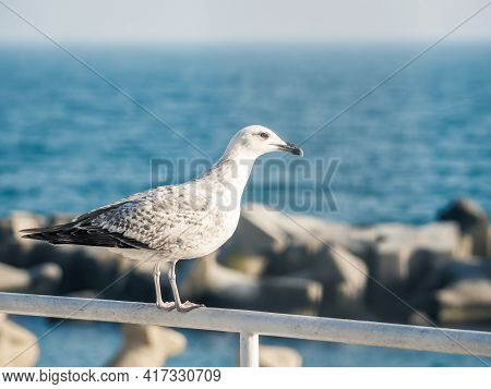 Single Isolated Seagull Bird Sitting On A Metal Bar With The Black Sea In The Background