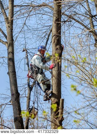 Moscow. Russia. April 17, 2021. A Worker In A Helmet On Ropes Climbs Up A Tree To Trim Branches. Rej