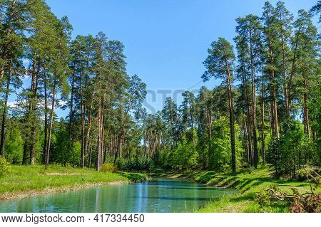 River Flowing Through Forest, Tall Pine Trees On Its Banks. Corner Of Virgin Nature Almost Untouched