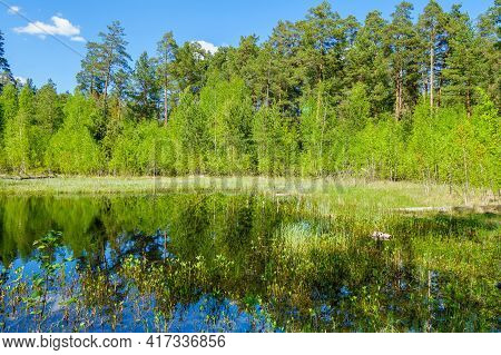 Forest Lake, Hidden Behind Wall Of Forest Trees. Forest Is Reflecting In Mirror Of Water Among Water