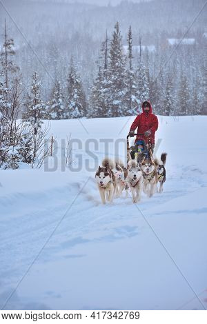 A Husky Dog Sled Carrying A Sleigh With People In A Snowy Forest