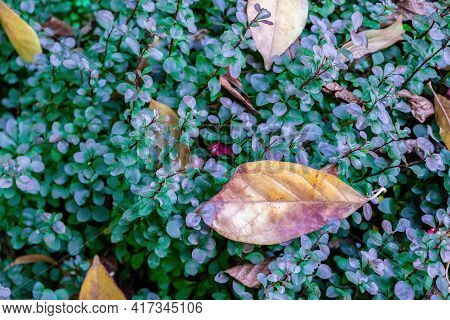 Yellow Leafs On Green Bush Abstract Background