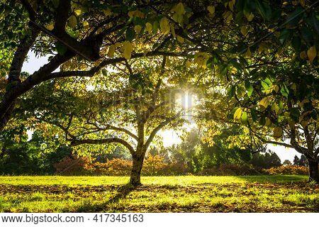 Amazing Sunset Through Trees In Autumn, Australia.
