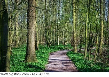 Forest In The Cronensteyn Polder, Leiden, Netherlands