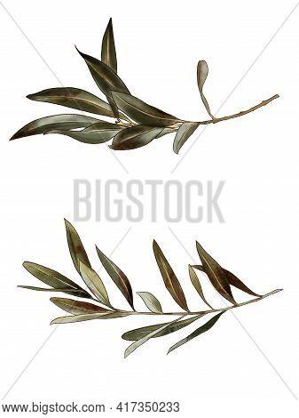 Branch, Flowers Watercolor Painting. Branch, Bush, Leaf, Sheet, Branch, Plants, Plant, Nature.
