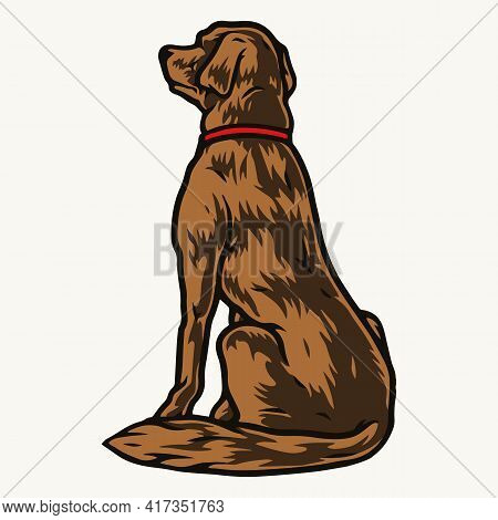 Golden Labrador Retriever Dog Sitting On Floor And Looking Into Distance In Vintage Style Isolated V