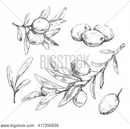 Olive Small Branches, Leaves And Berries Sketches In Vintage Style