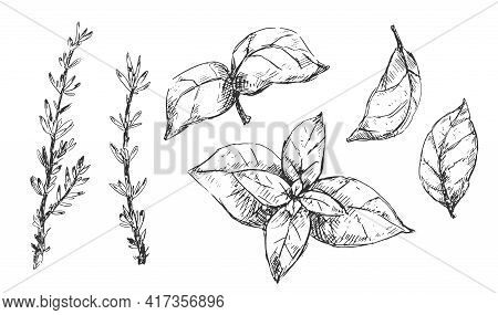 Set Of Italian Cuisine Spices And Herbs, Vintage Sketchy Illustration