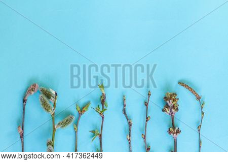 Branches With Budding Buds, Leaves, Flowers Of Various Trees And Bushes On A Blue Background In Spri