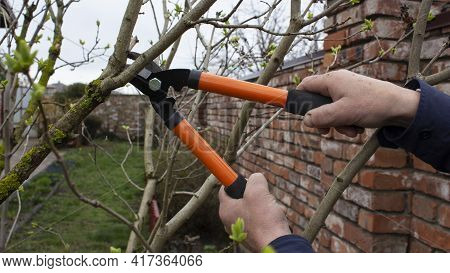 Gardening work in the spring. The gardener\\\'s male hands hold the pruner and cut the branches of the tree in the garden with the pruner.
