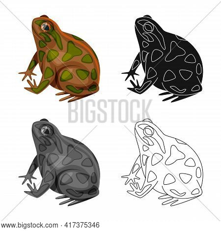 Vector Design Of Toad And Biology Symbol. Set Of Toad And Tropical Stock Vector Illustration.