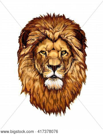 Lion Head Portrait From A Splash Of Watercolor, Colored Drawing, Realistic. Vector Illustration Of P