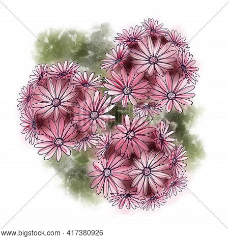 Red Cape Marguerites Blossom Flowers With Green Leafs On A White Background