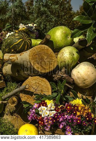 Beauty After Cleaning The Autumn Garden Bright Asters In A Wooden Box, Dried Tree Trunks, Crushed Pu
