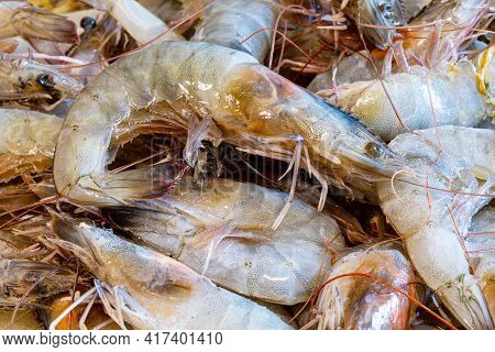 Fresh Prawns Over The Sink To Clean. Shrimps Background For Background Texture