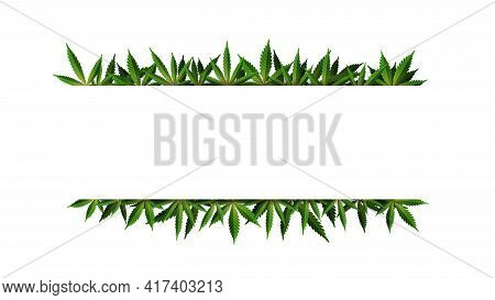 A Rectangular Frame Of Hemp Leaves Around A White Empty Space. Cannabis Leaf Frame Template For The