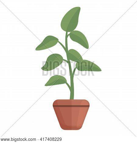 Botany Plant Pot Icon. Cartoon Of Botany Plant Pot Vector Icon For Web Design Isolated On White Back