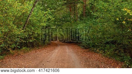 Beautiful Fall Scene On Curved Unpaved Road With Colorful Leaves On The Road