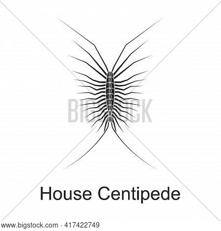 House Centipede Vector Black Icon. Vector Illustration Pest Insect House Centipede On White Backgrou