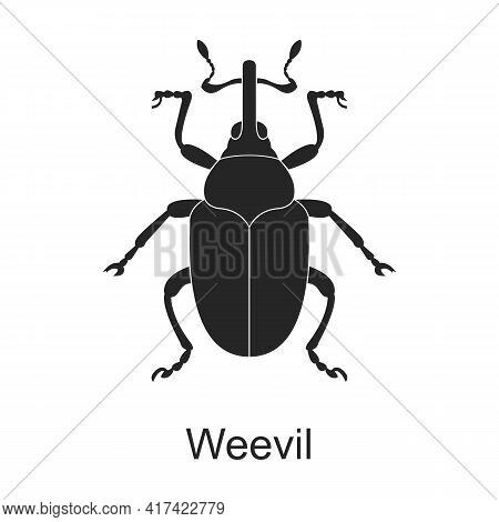 Weevil Vector Black Icon. Vector Illustration Pest Insect Weevil On White Background. Isolated Black