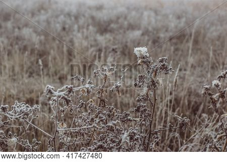 Field Of Grass And Flowers Covered With Hoarfrost.
