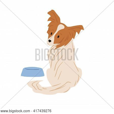 Papillon Dog With Hairy Butterfly-like Ears. Continental Toy Spaniel Sitting Near Feeder And Asking