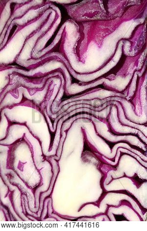 Close Up Flat Section Of A Head Of Purple Cabbage. Fresh Vegetarian Abstraction