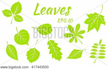 Collection Of Green Leaves. Leaves Of Different Shapes. Carved Leaves. Silhouette.