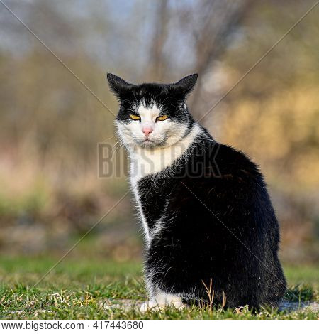 Moody Cat Sitting On Lawn Looking Angry