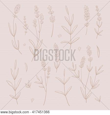 Lavender Beige Vector Set. Nude Lavender Hand Draw Background.