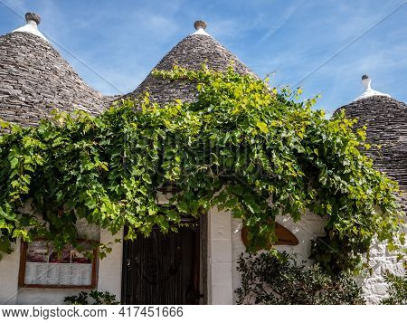 Alberobello, Italy - September 16, 2019: Trulli House Overgrown With Vines In Alberobello, Puglia, I
