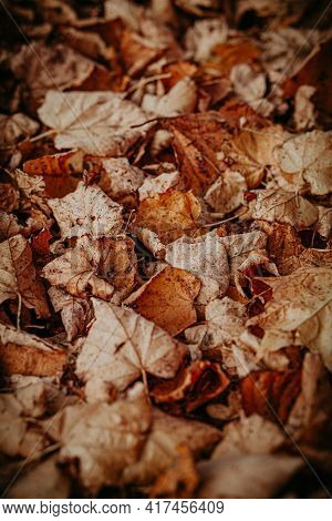 Warm Autumn Colors On A Vertical Image Of Leaves Fallen From Trees,fallen Linden Leaves