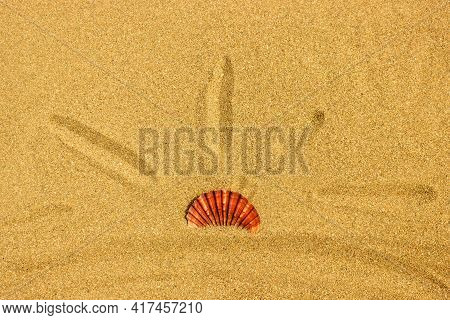 The Sun From A Bright Shell On The Clean Sand Of The Sea Beach. The Concept Of Vacation, Summer Vaca