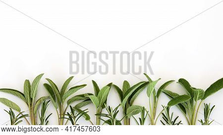 Salvia Officinalis, Rosemary Border. Leaves Isolated On White Background. Copy Space