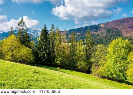 Countryside Landscape Of Carpathian Mountains. Trees On The Grassy Hill. Wonderful Nature Scenery In